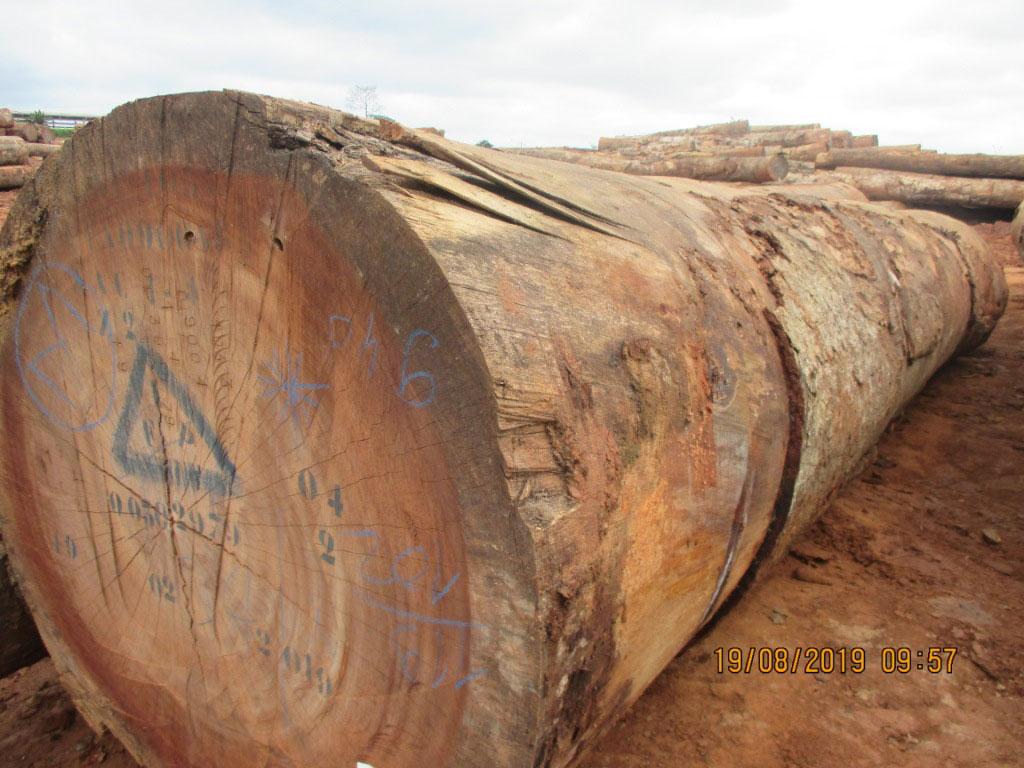 Round logs Kossipo
